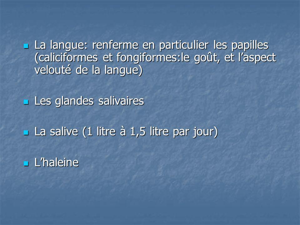 La langue: renferme en particulier les papilles (caliciformes et fongiformes:le goût, et laspect velouté de la langue) La langue: renferme en particulier les papilles (caliciformes et fongiformes:le goût, et laspect velouté de la langue) Les glandes salivaires Les glandes salivaires La salive (1 litre à 1,5 litre par jour) La salive (1 litre à 1,5 litre par jour) Lhaleine Lhaleine