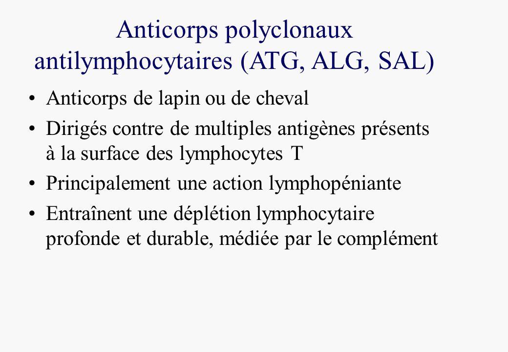 Anticorps polyclonaux antilymphocytaires (ATG, ALG, SAL) Anticorps de lapin ou de cheval Dirigés contre de multiples antigènes présents à la surface d