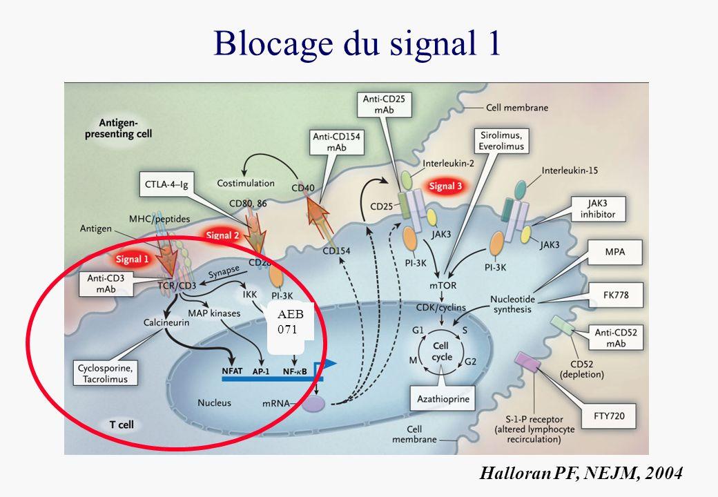 Blocage du signal 1 Halloran PF, NEJM, 2004 AEB 071