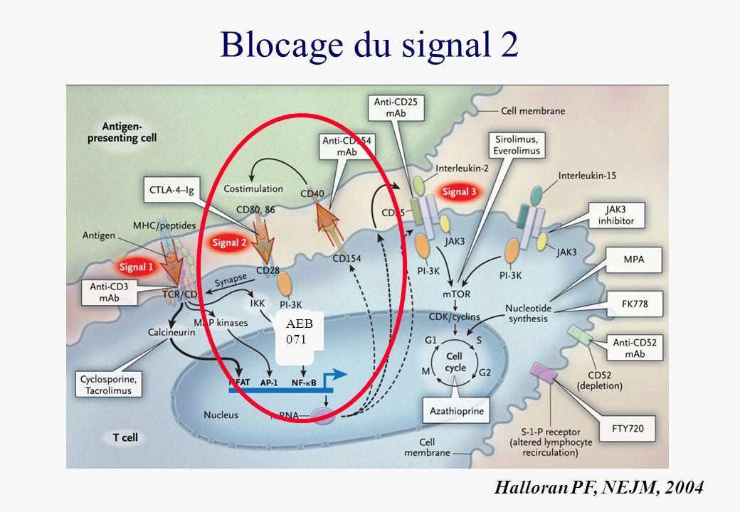 Blocage du signal 2 Halloran PF, NEJM, 2004 AEB 071