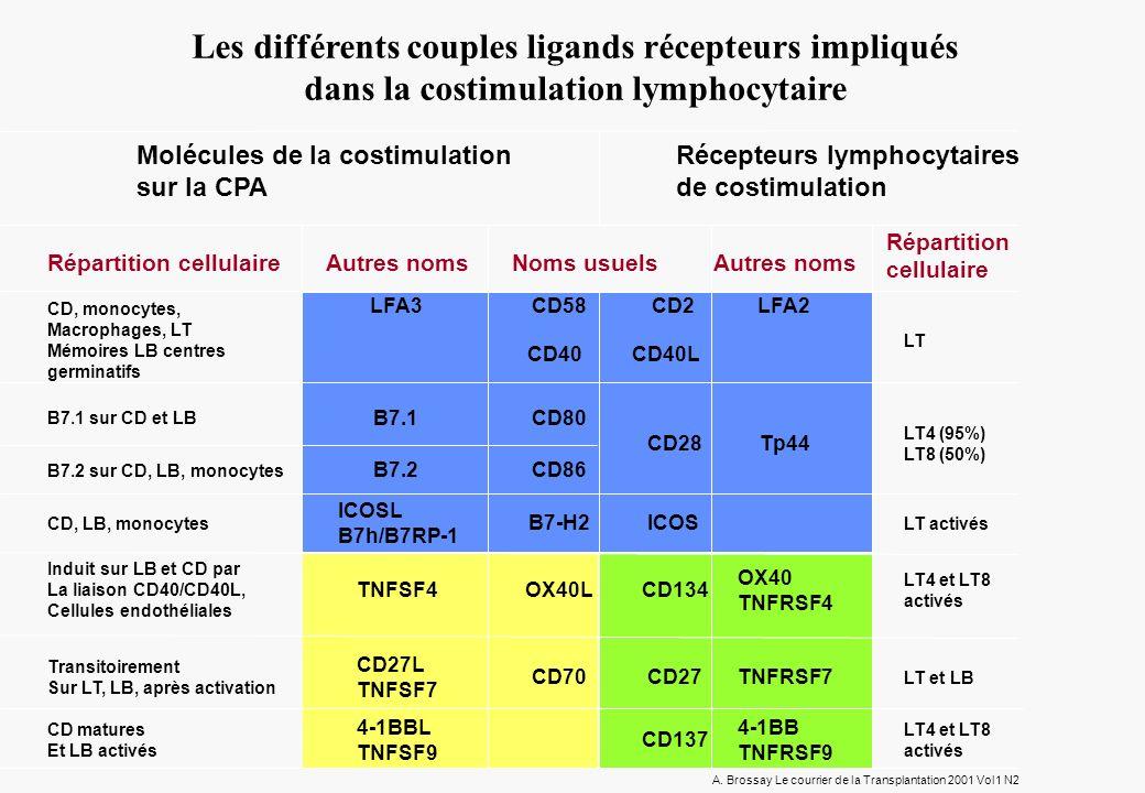 Les différents couples ligands récepteurs impliqués dans la costimulation lymphocytaire Molécules de la costimulation sur la CPA Récepteurs lymphocytaires de costimulation Répartition cellulaire Répartition cellulaire Autres noms Noms usuels CD, monocytes, Macrophages, LT Mémoires LB centres germinatifs B7.1 sur CD et LB B7.2 sur CD, LB, monocytes CD, LB, monocytes Induit sur LB et CD par La liaison CD40/CD40L, Cellules endothéliales Transitoirement Sur LT, LB, après activation CD matures Et LB activés LFA3CD58CD2LFA2 LT B7.1CD80 CD28Tp44 LT4 (95%) LT8 (50%) B7.2CD86 ICOSL B7h/B7RP-1 B7-H2ICOS LT activés TNFSF4OX40LCD134 OX40 TNFRSF4 LT4 et LT8 activés CD27L TNFSF7 CD70CD27TNFRSF7 LT et LB 4-1BBL TNFSF9 CD137 4-1BB TNFRSF9 LT4 et LT8 activés A.