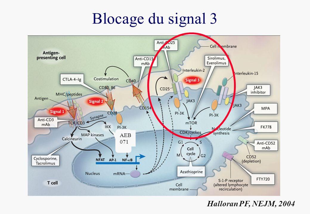 Blocage du signal 3 Halloran PF, NEJM, 2004 AEB 071