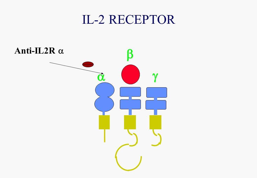 IL-2 RECEPTOR Anti-IL2R
