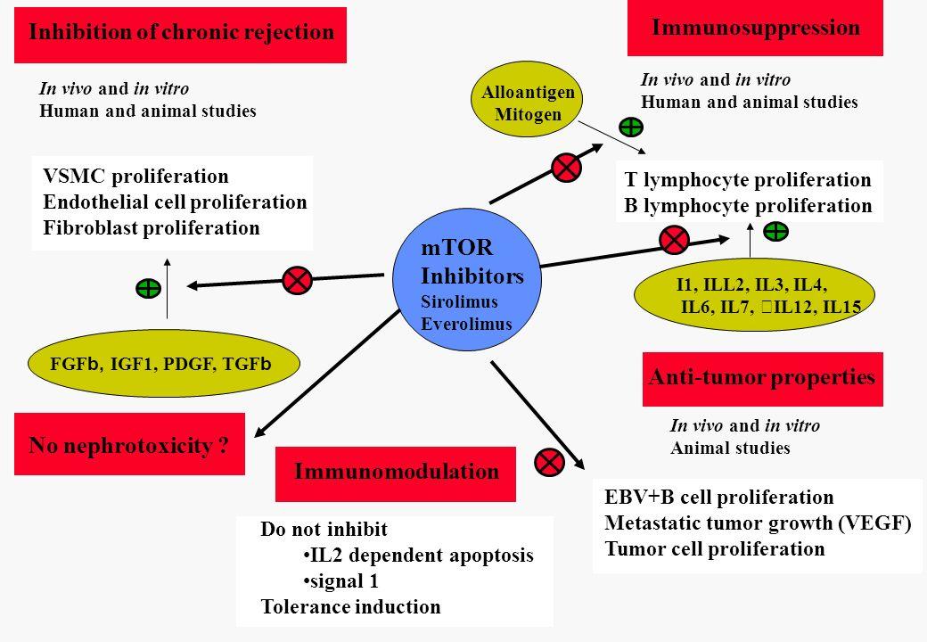 mTOR Inhibitors Sirolimus Everolimus No nephrotoxicity ? Inhibition of chronic rejection VSMC proliferation Endothelial cell proliferation Fibroblast