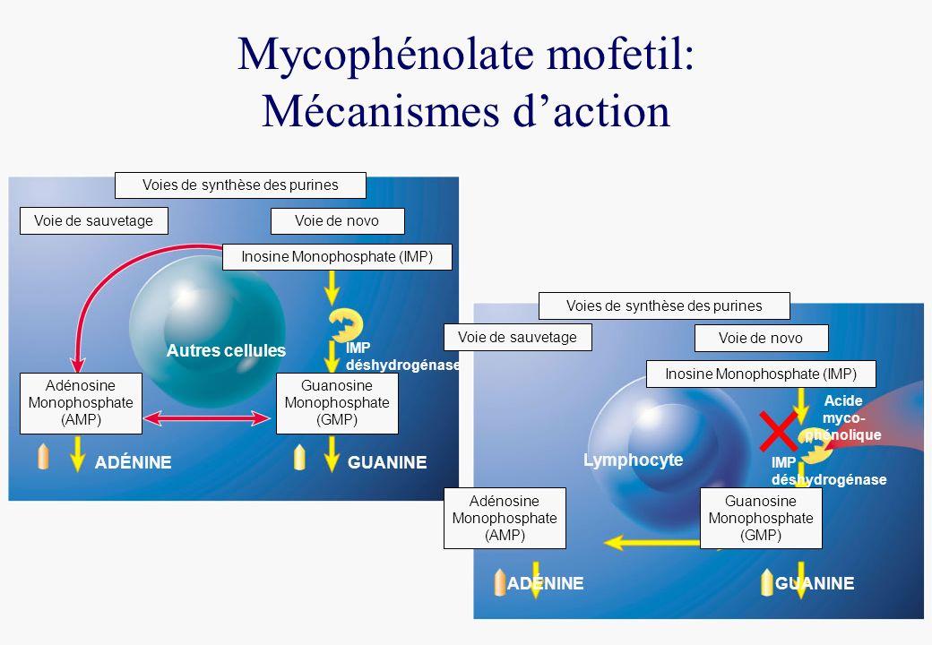 Voies de synthèse des purines Voie de novo Inosine Monophosphate (IMP) Guanosine Monophosphate (GMP) Adénosine Monophosphate (AMP) Voie de sauvetage GUANINEADÉNINE Autres cellules Lymphocyte Acide myco- phénolique Voies de synthèse des purines Voie de novo Inosine Monophosphate (IMP) Guanosine Monophosphate (GMP) Adénosine Monophosphate (AMP) Voie de sauvetage GUANINEADÉNINE IMP déshydrogénase IMP déshydrogénase Mycophénolate mofetil: Mécanismes daction