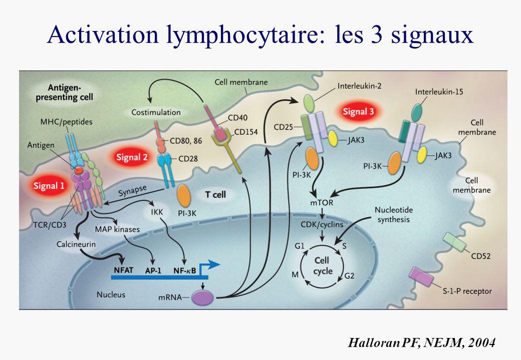 Activation lymphocytaire: les 3 signaux Halloran PF, NEJM, 2004