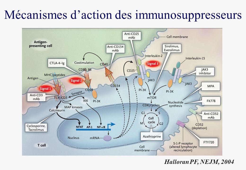 Mécanismes daction des immunosuppresseurs Halloran PF, NEJM, 2004
