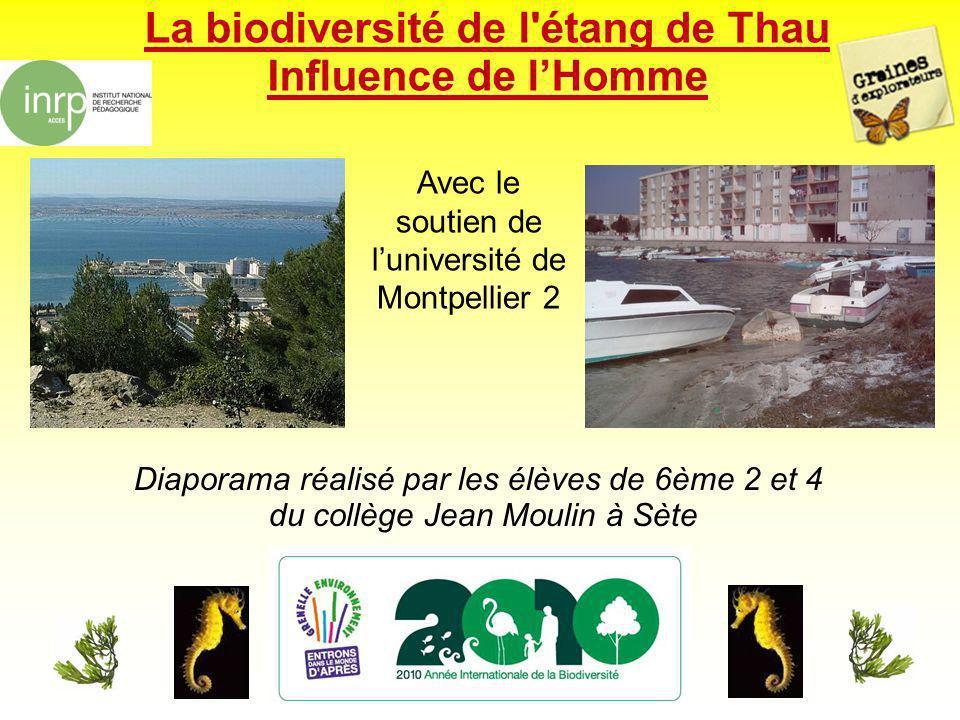 La biodiversité de l'étang de Thau Influence de lHomme Diaporama réalisé par les élèves de 6ème 2 et 4 du collège Jean Moulin à Sète Avec le soutien d