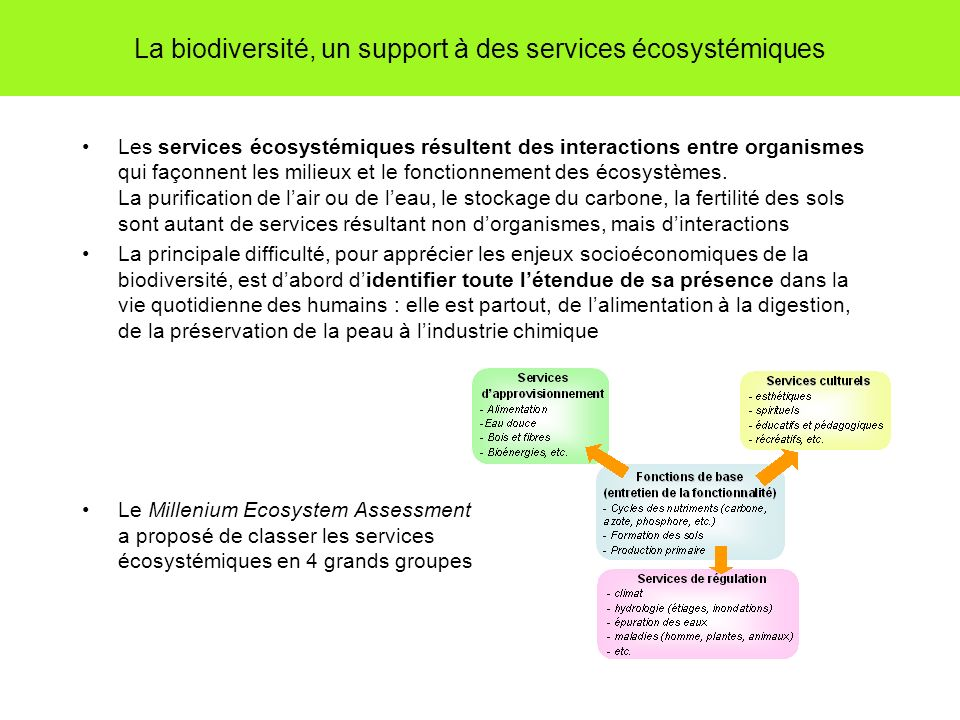 La biodiversité, un support à des services écosystémiques Les services écosystémiques résultent des interactions entre organismes qui façonnent les mi