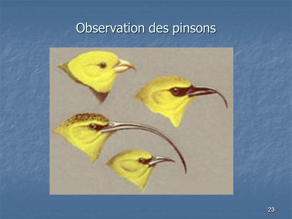 23 Observation des pinsons