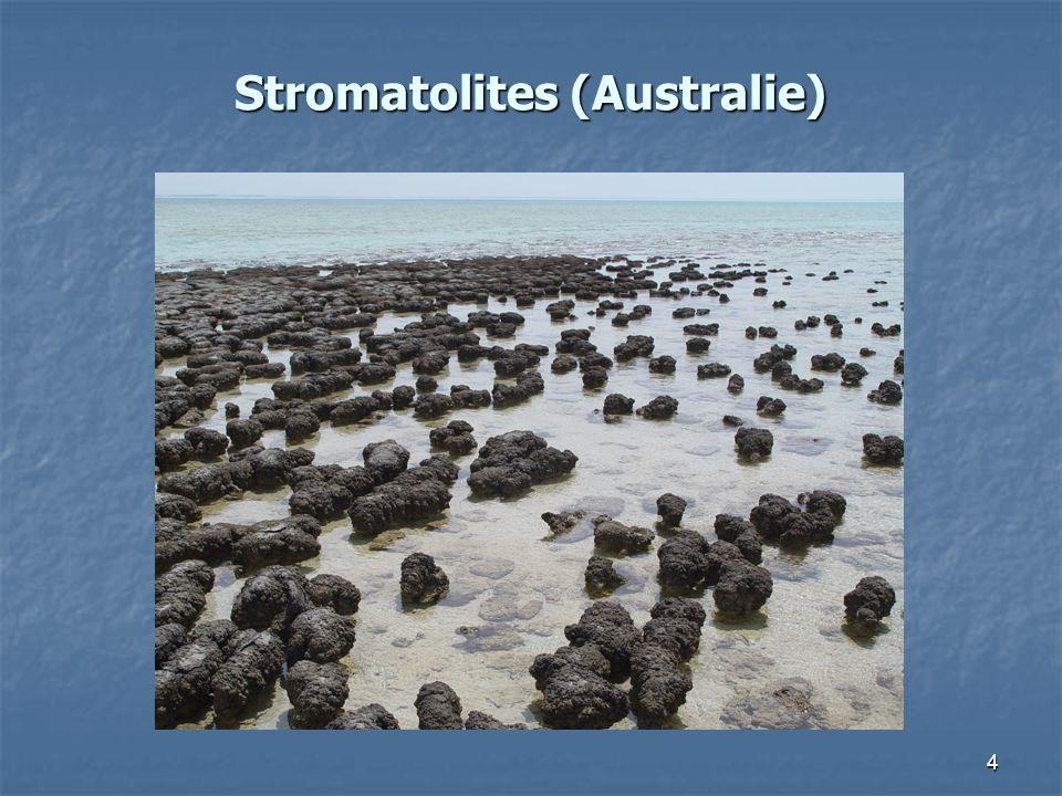 4 Stromatolites (Australie)