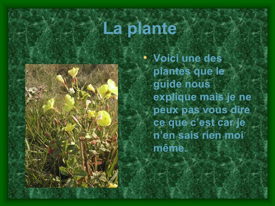 La plante Voici une des plantes que le guide nous explique mais je ne peux pas vous dire ce que cest car je nen sais rien moi même.