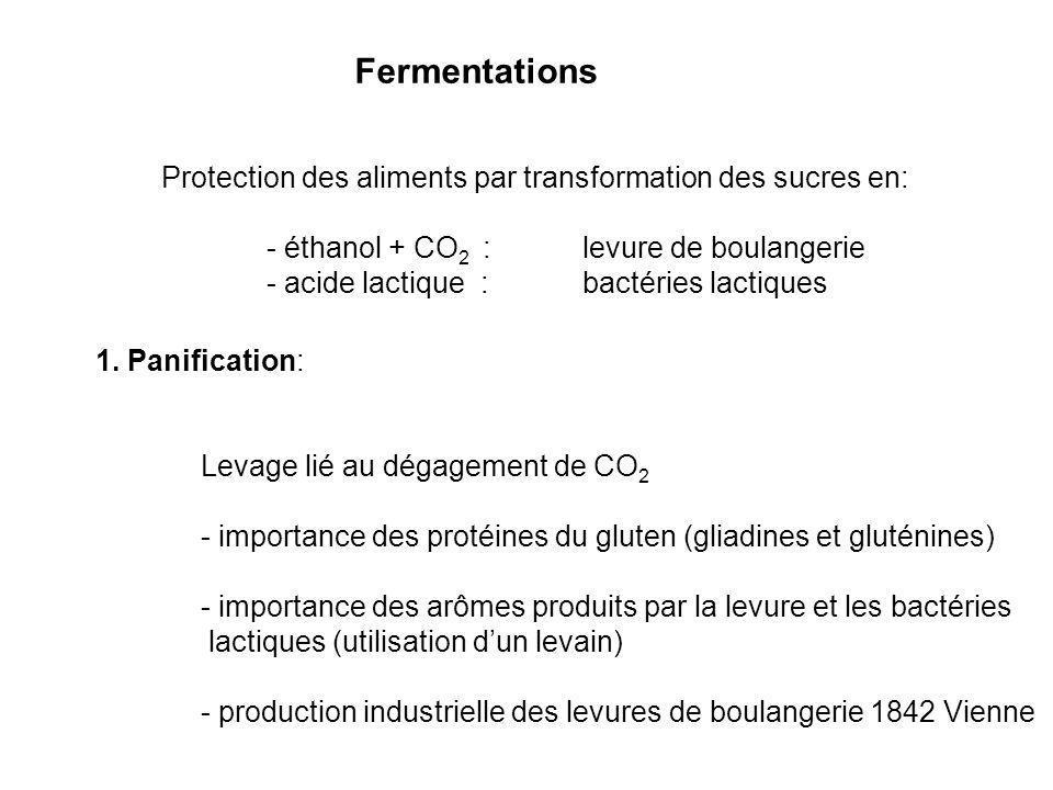Fermentations Protection des aliments par transformation des sucres en: - éthanol + CO 2 : levure de boulangerie - acide lactique : bactéries lactique
