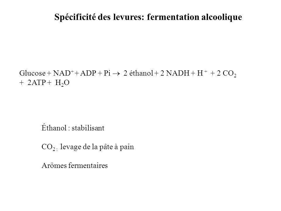 Spécificité des levures: fermentation alcoolique Glucose + NAD + + ADP + Pi 2 éthanol + 2 NADH + H + + 2 CO 2 + 2ATP + H 2 O Éthanol : stabilisant CO