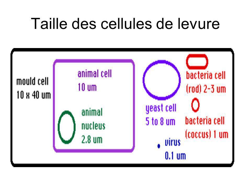 Taille des cellules de levure