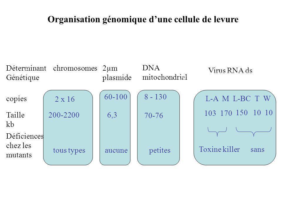 Déterminant Génétique copies Taille kb Déficiences chez les mutants chromosomes2µm plasmide DNA mitochondrial Virus RNA ds 2 x 16 200-2200 tous types