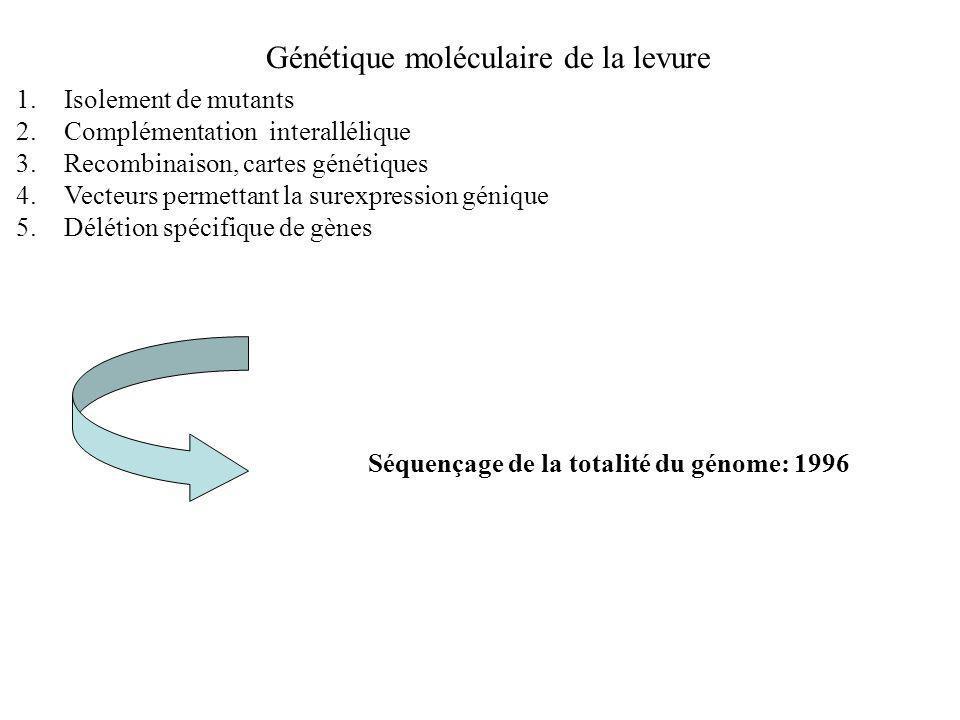 Génétique moléculaire de la levure 1.Isolement de mutants 2.Complémentation interallélique 3.Recombinaison, cartes génétiques 4.Vecteurs permettant la