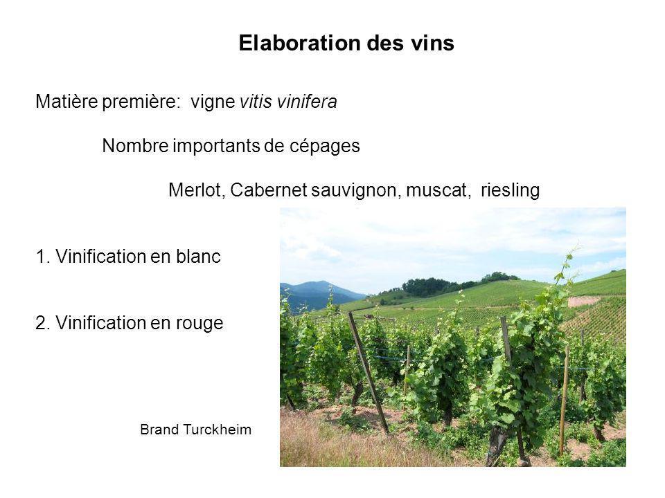 Elaboration des vins Matière première: vigne vitis vinifera Nombre importants de cépages Merlot, Cabernet sauvignon, muscat, riesling 1. Vinification