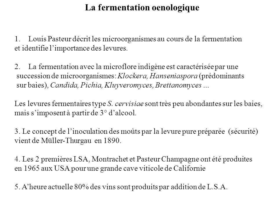 La fermentation oenologique 1.Louis Pasteur décrit les microorganismes au cours de la fermentation et identifie limportance des levures. 2.La fermenta