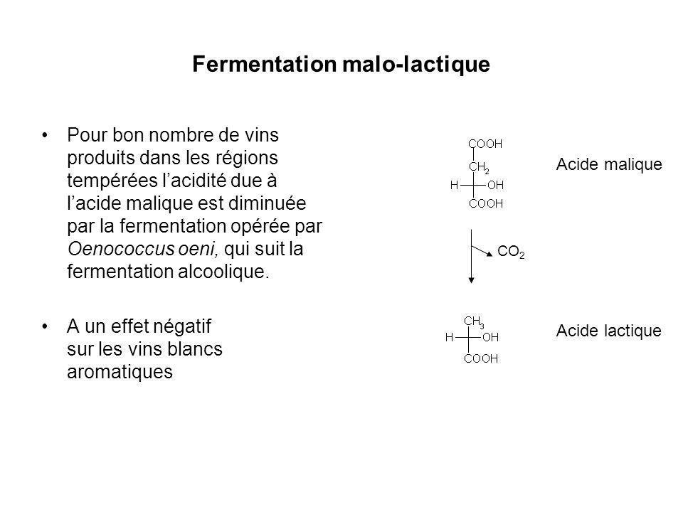 Fermentation malo-lactique Pour bon nombre de vins produits dans les régions tempérées lacidité due à lacide malique est diminuée par la fermentation