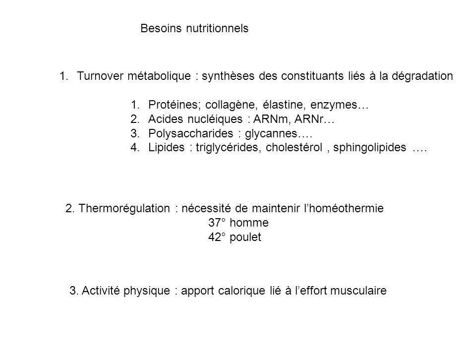Besoins alimentaires pour les humains turnover métabolique 1.