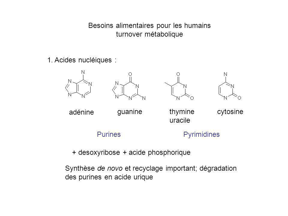 Besoins alimentaires pour les humains turnover métabolique 1. Acides nucléiques : adénine guaninethymine uracile cytosine + desoxyribose + acide phosp