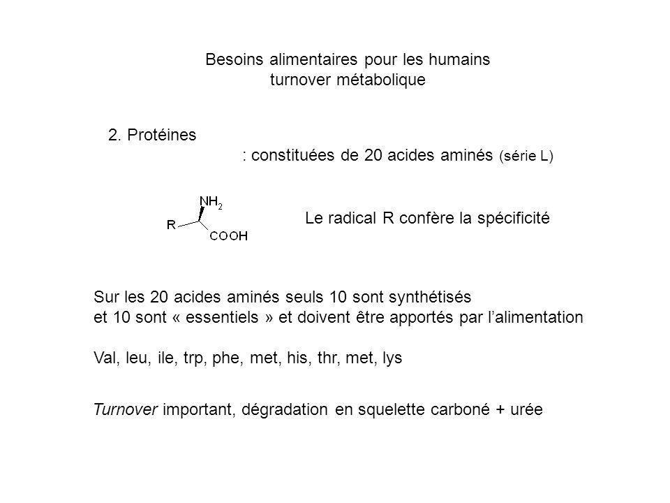 Besoins alimentaires pour les humains turnover métabolique 2. Protéines : constituées de 20 acides aminés (série L) Le radical R confère la spécificit