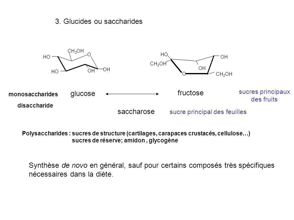 3. Glucides ou saccharides O OH OH OH OH CH 2 OH glucose O HO OH CH 2 OH fructose monosaccharides sucres principaux des fruits disaccharide saccharose