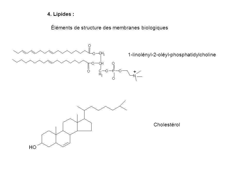 4. Lipides : Cholestérol 1-linolényl-2-oléyl-phosphatidylcholine Éléments de structure des membranes biologiques CH 2 CH C H 2 OPO O O O O O N O + +