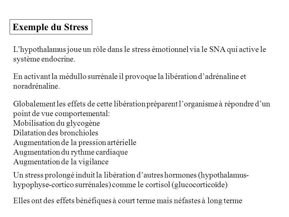 Exemple du Stress Lhypothalamus joue un rôle dans le stress émotionnel via le SNA qui active le système endocrine. En activant la médullo surrénale il