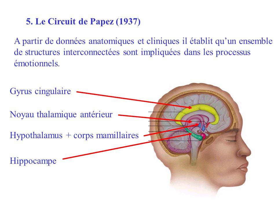 5. Le Circuit de Papez (1937) Hippocampe A partir de données anatomiques et cliniques il établit quun ensemble de structures interconnectées sont impl