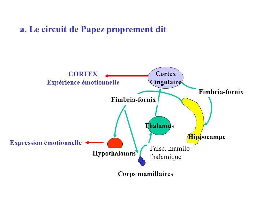 Hippocampe Fimbria-fornix Cortex Cingulaire Thalamus Faisc. mamilo- thalamique CORTEX Expérience émotionnelle Expression émotionnelle Corps mamillaire