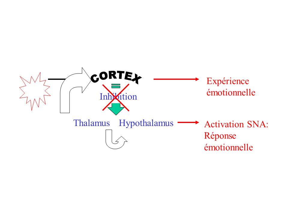 ThalamusHypothalamus Inhibition Expérience émotionnelle Activation SNA: Réponse émotionnelle
