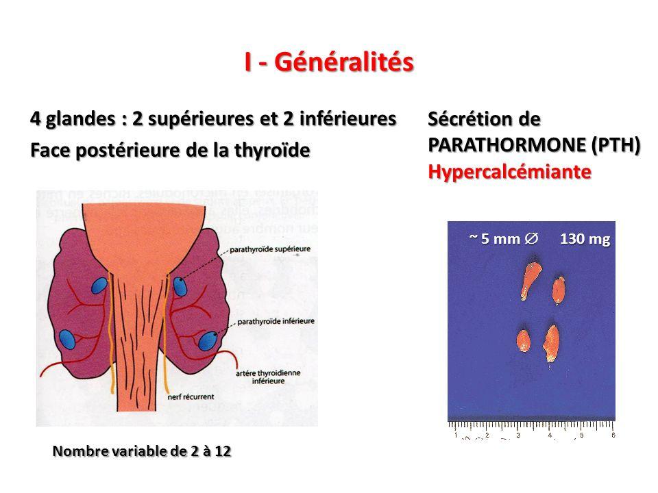 I - Généralités 4 glandes : 2 supérieures et 2 inférieures Face postérieure de la thyroïde ~ 5 mm 130 mg Nombre variable de 2 à 12 Sécrétion de PARATHORMONE (PTH) Hypercalcémiante