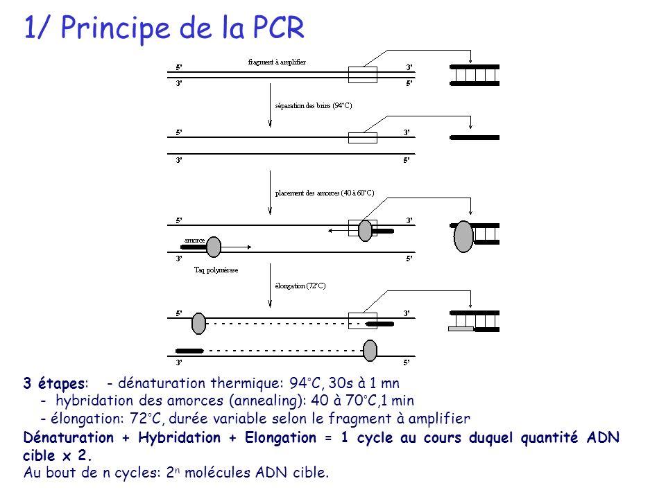 1/ Principe de la PCR 3 étapes: - dénaturation thermique: 94°C, 30s à 1 mn - hybridation des amorces (annealing): 40 à 70°C,1 min - élongation: 72°C,