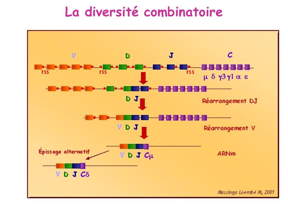 La diversité combinatoire