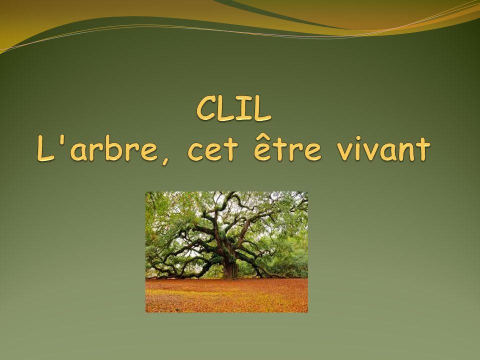 Définition Un arbre est une plante terrestre capable de se développer en hauteur, en général au delà de sept mètres.