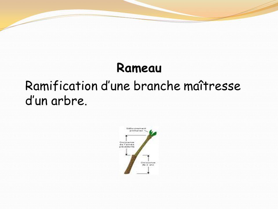 Rameau Ramification dune branche maîtresse dun arbre.