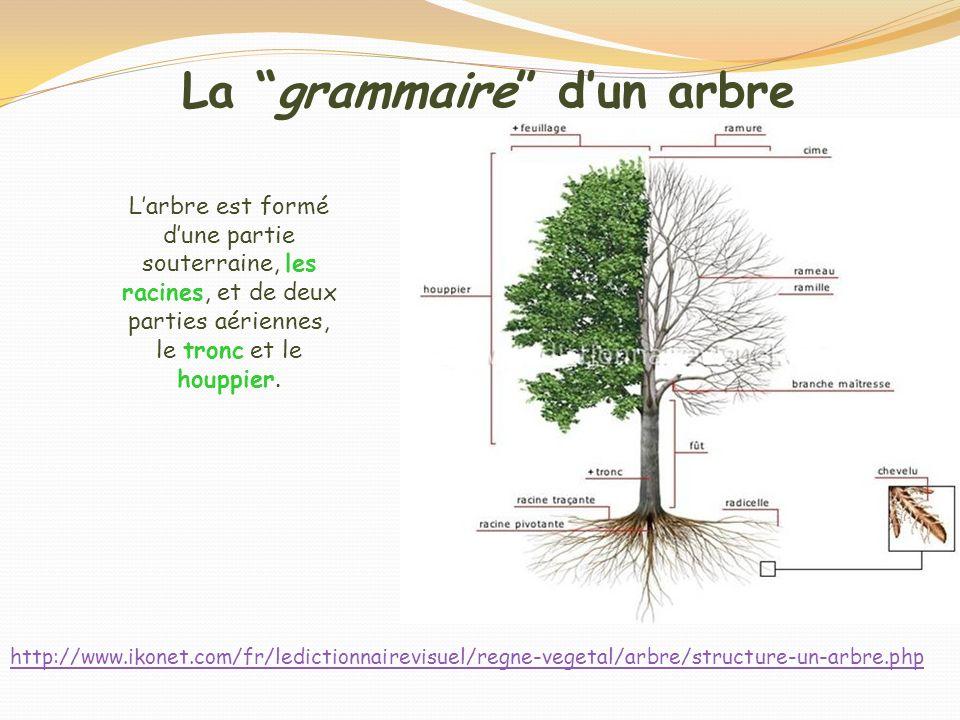 La grammaire dun arbre Larbre est formé dune partie souterraine, les racines, et de deux parties aériennes, le tronc et le houppier. http://www.ikonet