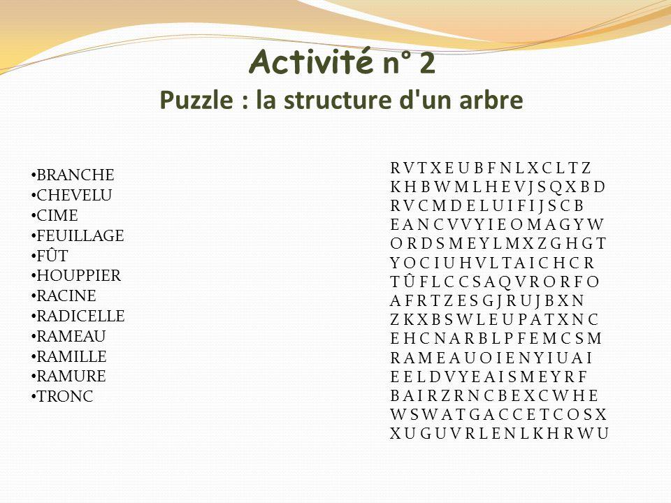 Activité n° 2 Puzzle : la structure d'un arbre R V T X E U B F N L X C L T Z K H B W M L H E V J S Q X B D R V C M D E L U I F I J S C B E A N C V V Y