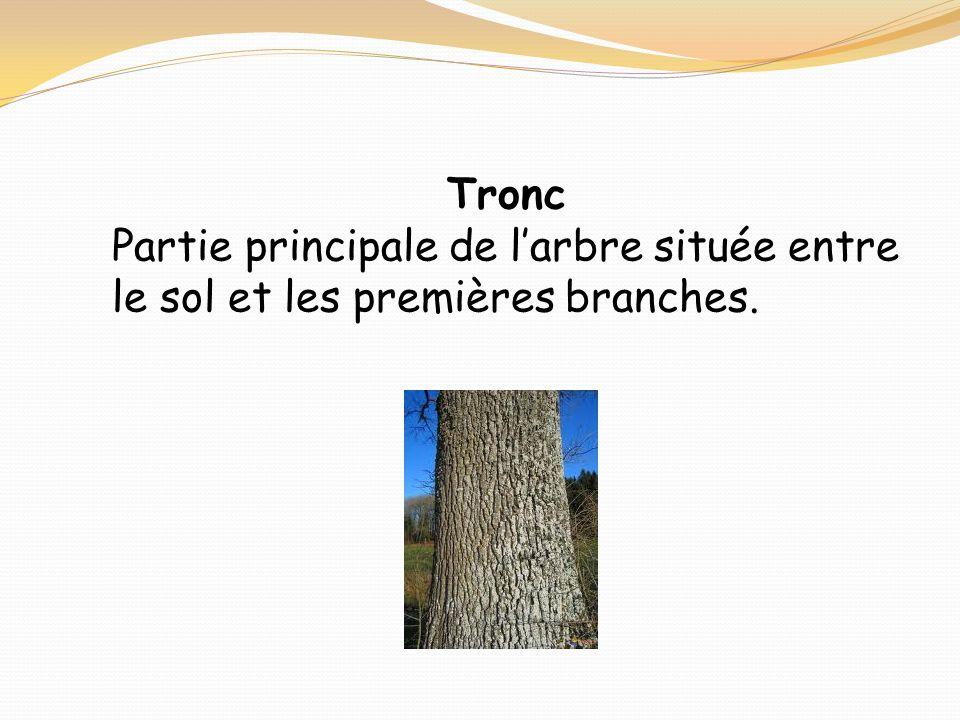 Tronc Partie principale de larbre située entre le sol et les premières branches.