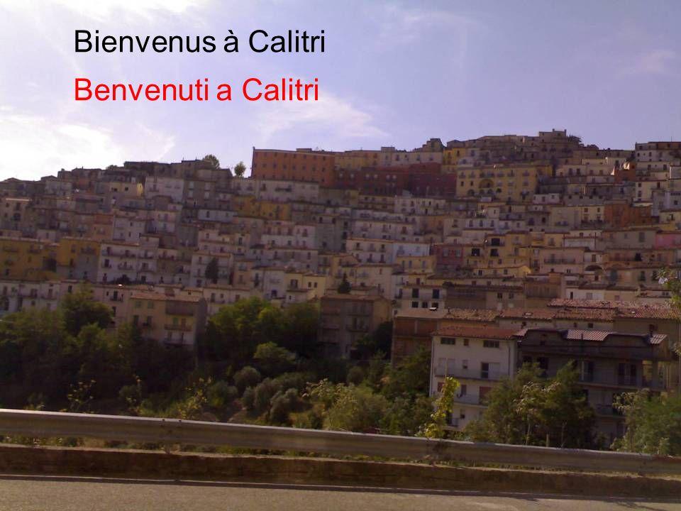 La prima cosa che si vede, arrivando a Calitri, sono i pini marittimi La première image que lon voit, en arrivant à Calitri, ce sont les pins maritimes