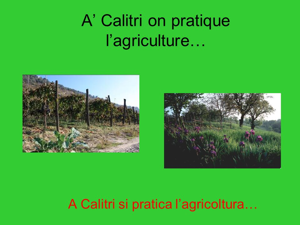 A Calitri on pratique lagriculture… A Calitri si pratica lagricoltura…