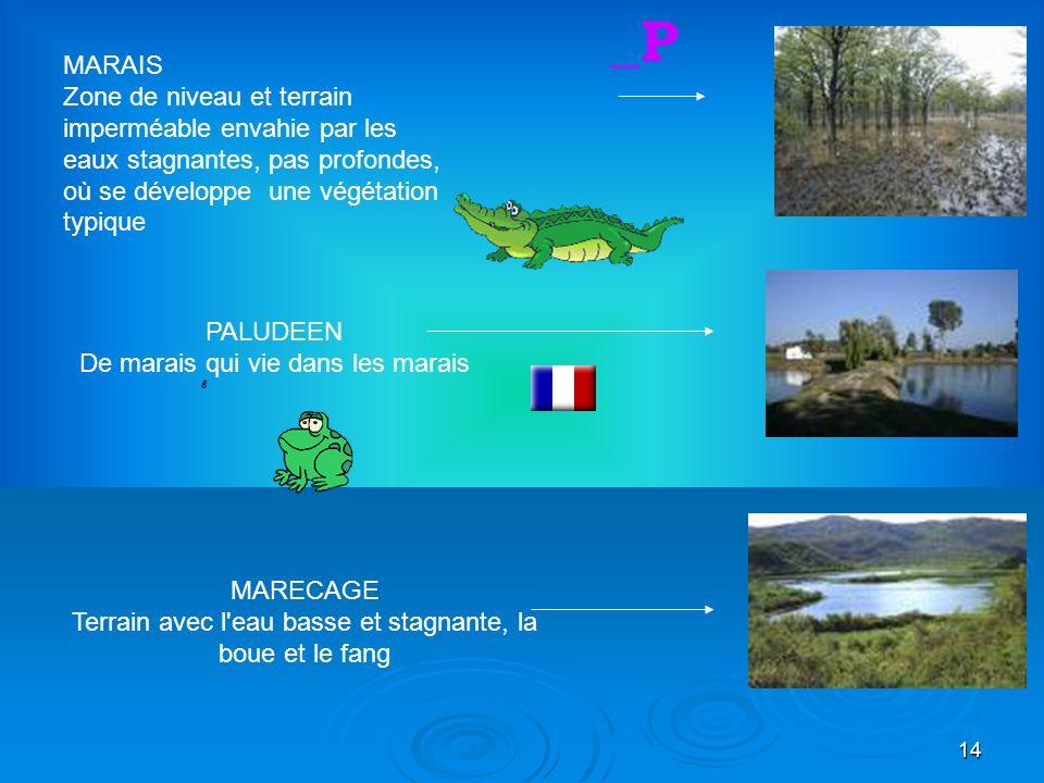 14 PALUDEEN De marais qui vie dans les marais MARECAGE Terrain avec l eau basse et stagnante, la boue et le fang _P MARAIS Zone de niveau et terrain imperméable envahie par les eaux stagnantes, pas profondes, où se développe une végétation typique