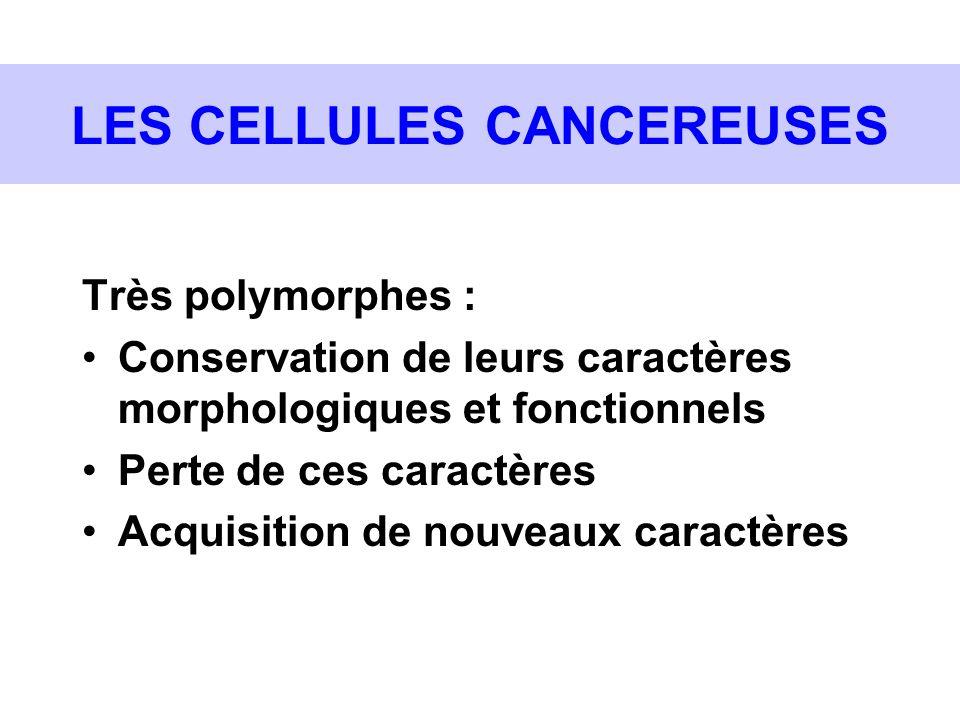 LES CELLULES CANCEREUSES Très polymorphes : Conservation de leurs caractères morphologiques et fonctionnels Perte de ces caractères Acquisition de nou
