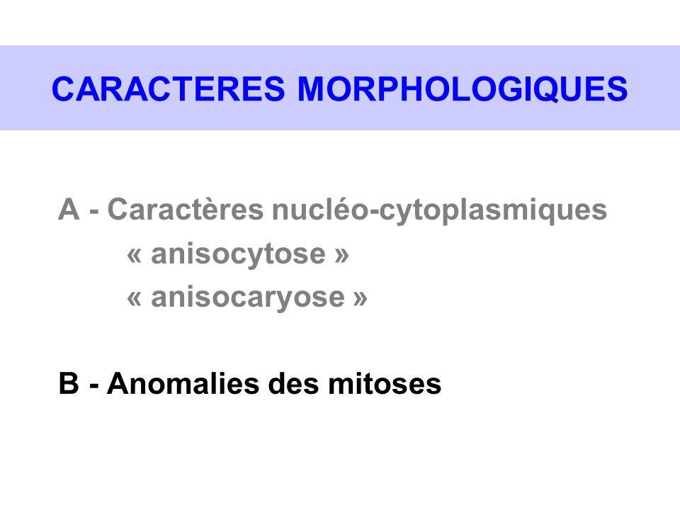 CARACTERES MORPHOLOGIQUES A - Caractères nucléo-cytoplasmiques « anisocytose » « anisocaryose » B - Anomalies des mitoses