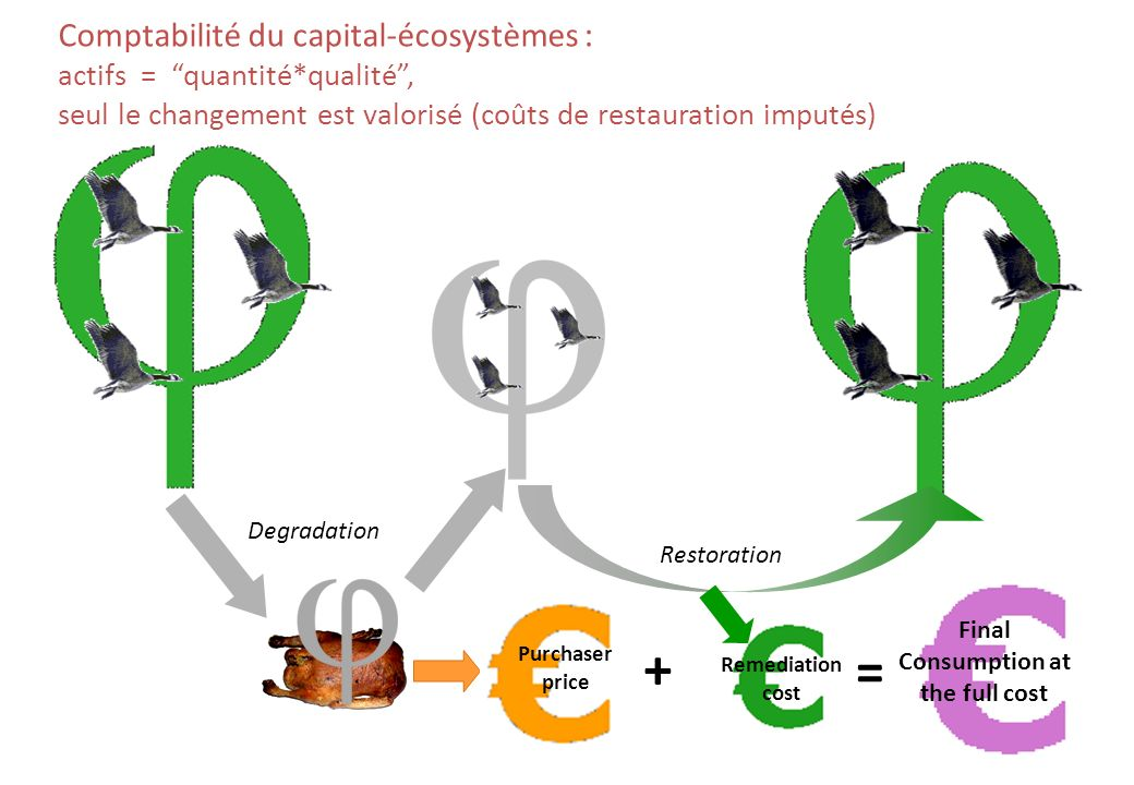 Restoration + Purchaser price = Final Consumption at the full cost Remediation cost Degradation Comptabilité du capital-écosystèmes : actifs = quantité*qualité, seul le changement est valorisé (coûts de restauration imputés)