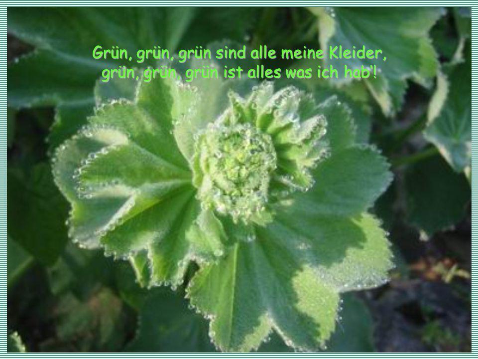 Grün, grün, grün sind alle meine Kleider, grün, grün, grün ist alles was ich hab!
