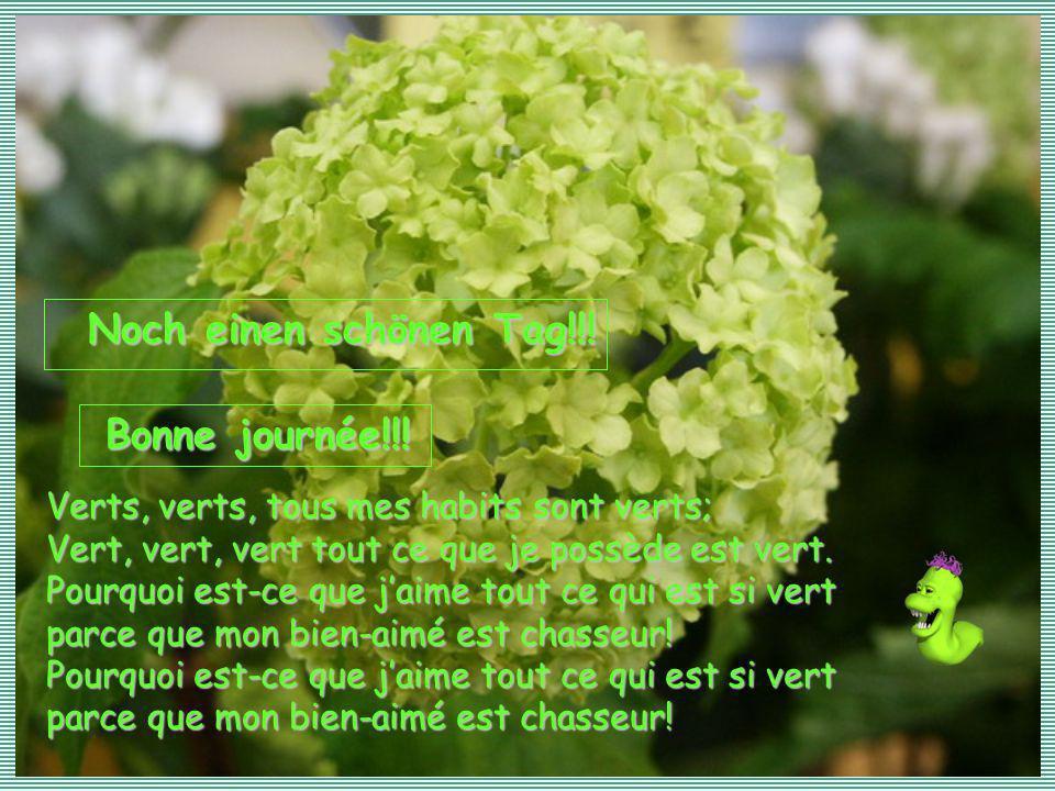 Verts, verts, tous mes habits sont verts; Vert, vert, vert tout ce que je possède est vert.
