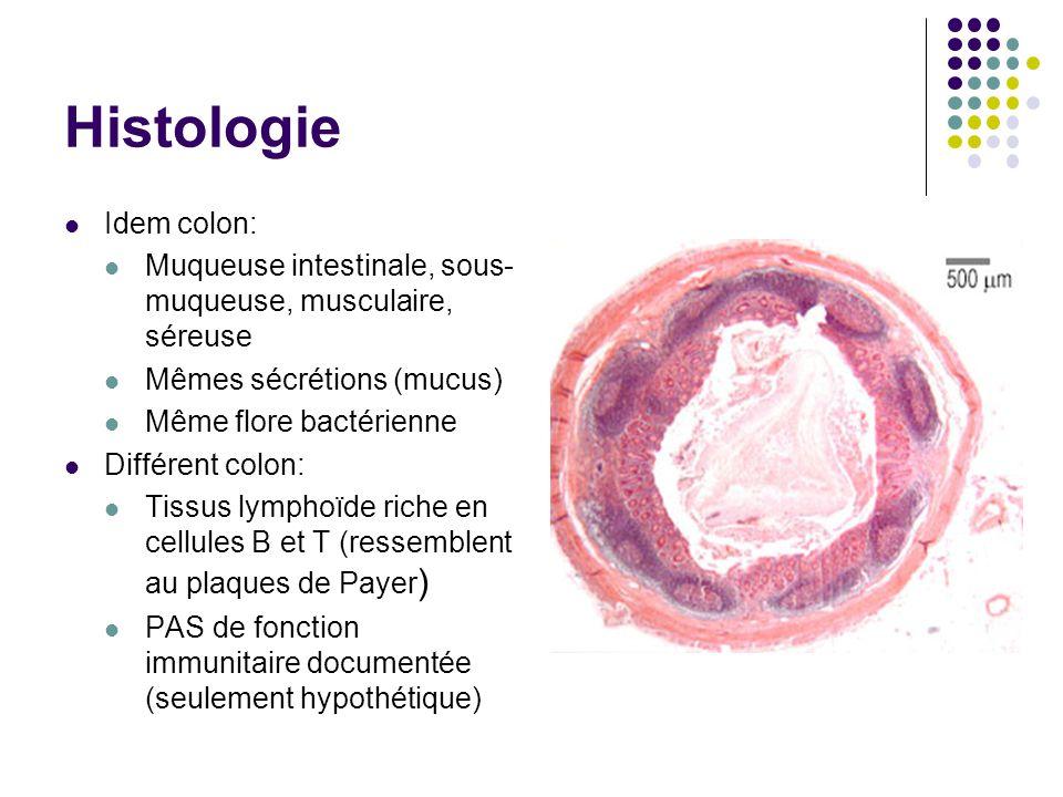 NormalAppendicite (fécalithe) Appendicite Appendicite perforée